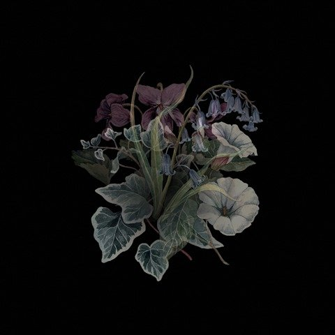 nhor-wildflowers-album-cover